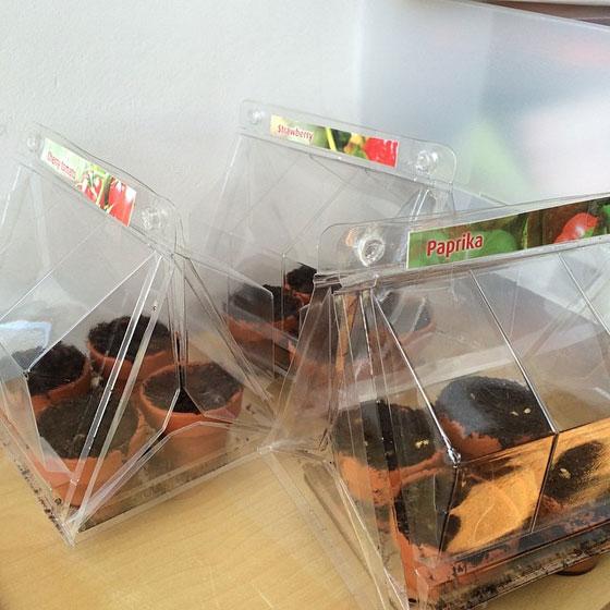 kweekkastjes aardbei, tomaat, paprika