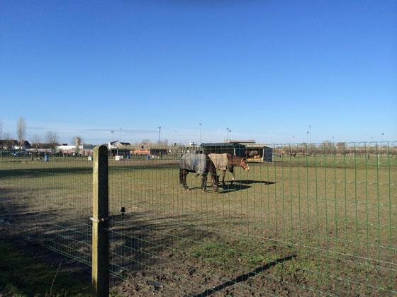 paarden in de wei