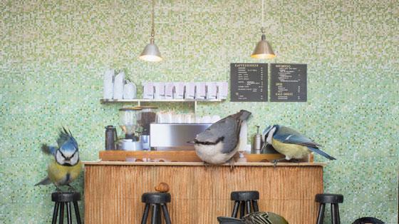Piipshow: Vogels in een Bar?