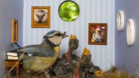 Piipshow: Vogels in een woonkamer?