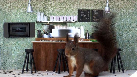 Piipshow: eekhoorn in een Bar?