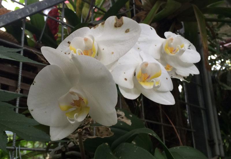 bt02 Vlinders in de Botanische Tuinen