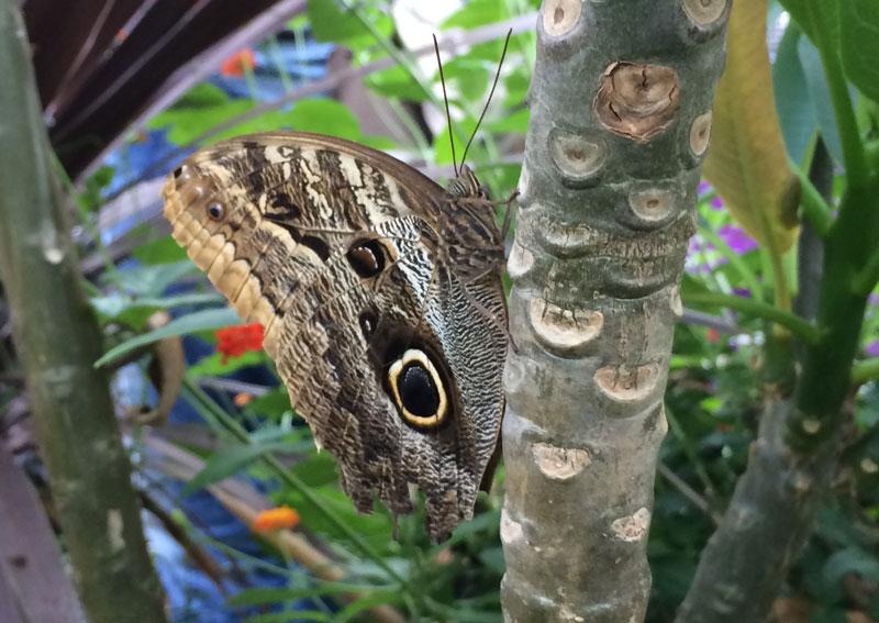 bt03 Vlinders in de Botanische Tuinen