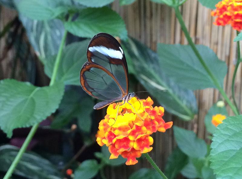 bt04 Vlinders in de Botanische Tuinen