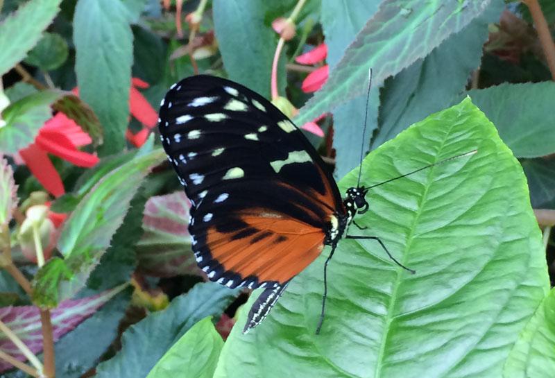 bt05 Vlinders in de Botanische Tuinen