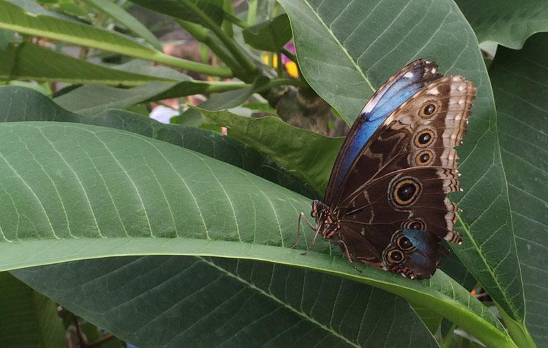 bt13 Vlinders in de Botanische Tuinen