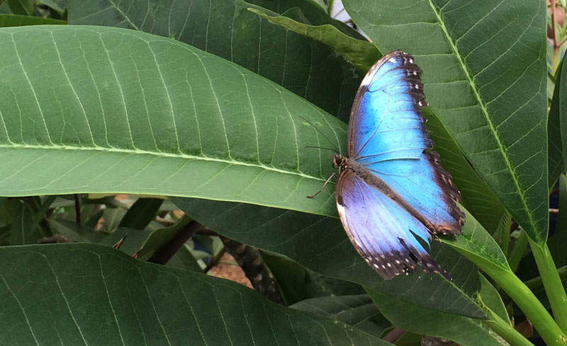 bt14 Vlinders in de Botanische Tuinen