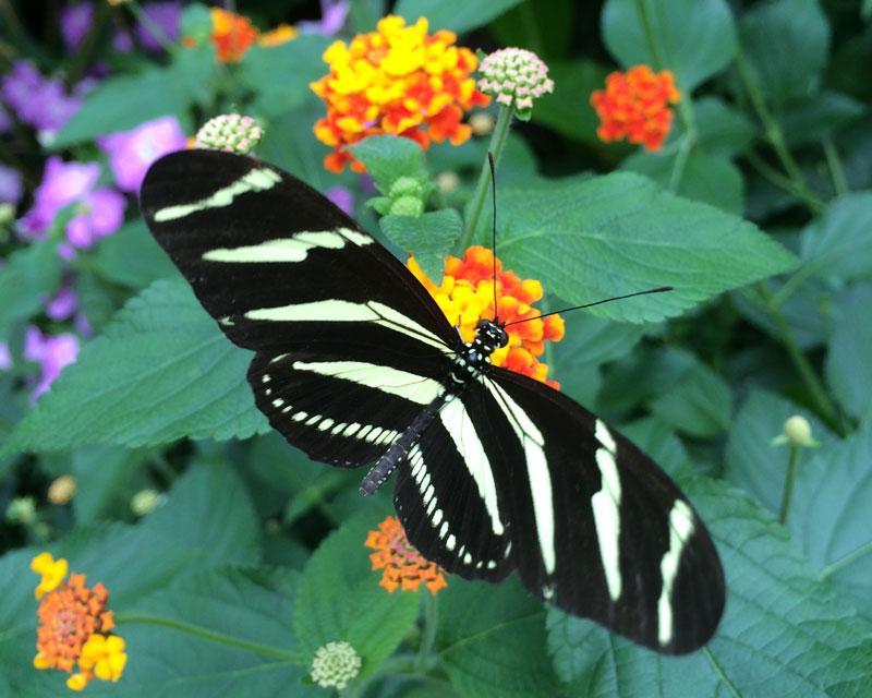bt21 Vlinders in de Botanische Tuinen