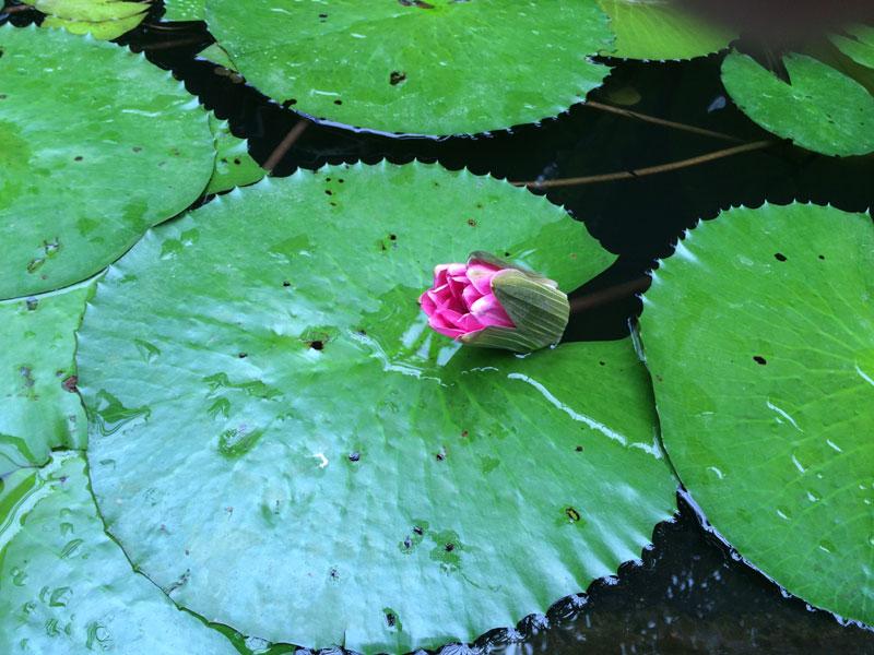 bt22 Vlinders in de Botanische Tuinen