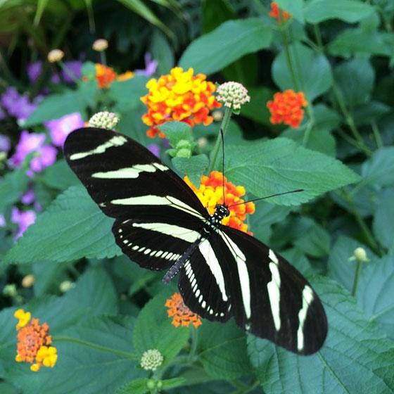 vlinder botanische tuinen
