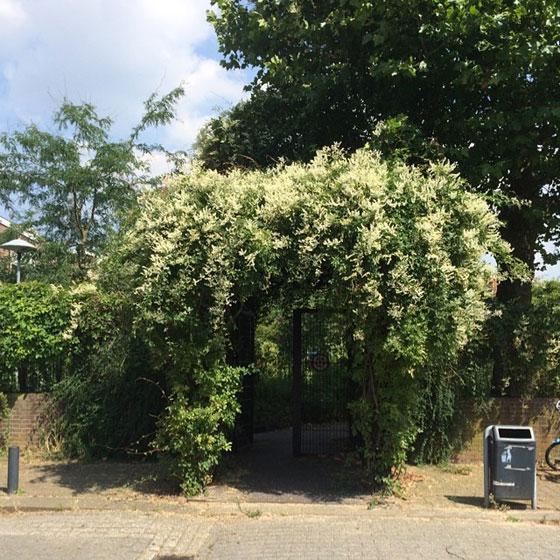 geheime tuin Utrecht