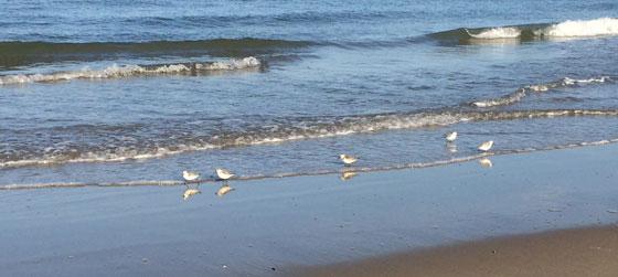 Kleine vogeltjes