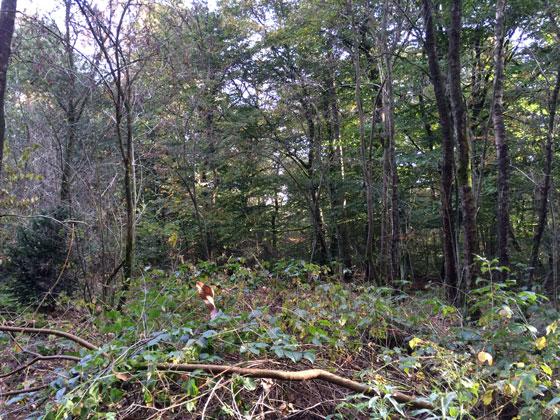 Zanderij Maarn bomen bos