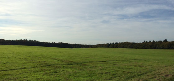 Zanderij Maarn grasland