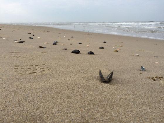 Schelpen strand