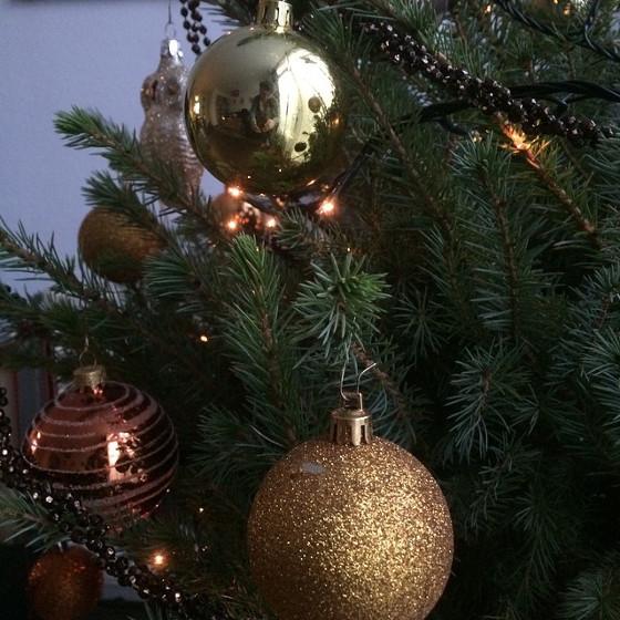 echte kerstboom