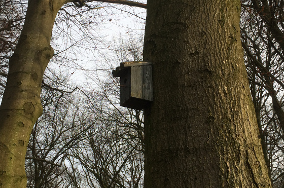 Natuurwandeling Grebbeberg vogelhuisje in boom