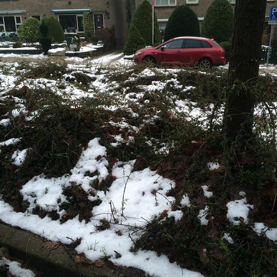 Sneeuw in Doorn