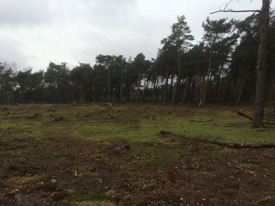 Natuurwandeling Plantage Willem III