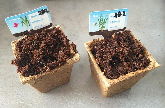Dagboek van een Moestuintje tijm en lente-ui geplant
