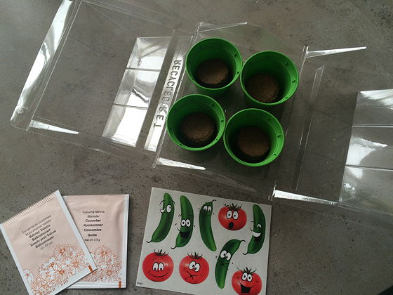 Dagboek van een Moestuintje minikatje hema komkommer tomaat