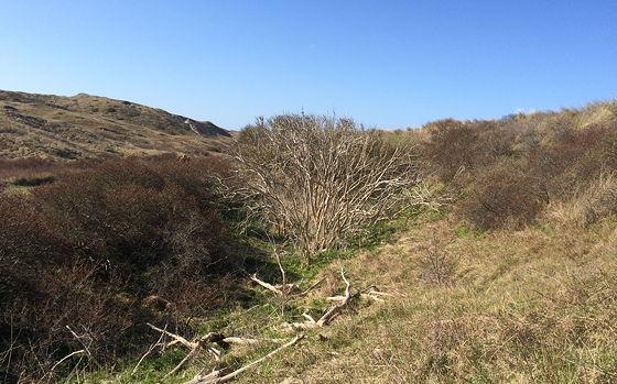 Strandwandeling De Koog & Vuurtoren De Cocksdorp dode boom