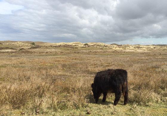 Wandeling De Muy op Texel Galloway