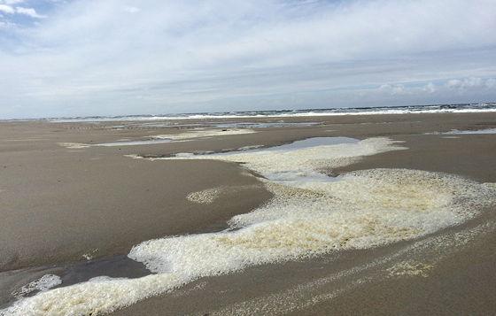 Wandeling De Muy op Texel schuim