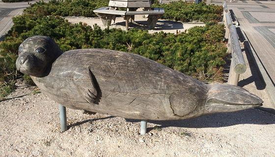 Juttersmuseum en Oorlogs- en Vliegtuigmuseum wachten in De Koog zeehond bij de Jumbo