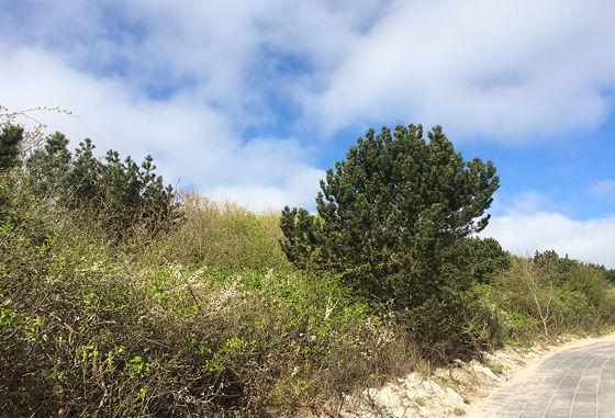 Huifkartocht en Wandeling over Strand en door Duinen weer omhoog