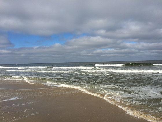 Huifkartocht en Wandeling over Strand en door Duinen mooi weer zee