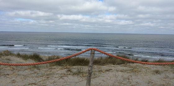 Huifkartocht en Wandeling over Strand en door Duinen over de zeereep