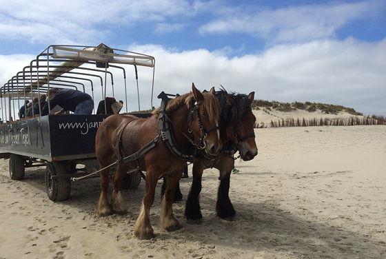 Huifkartocht en Wandeling over Strand en door Duinen foto's maken