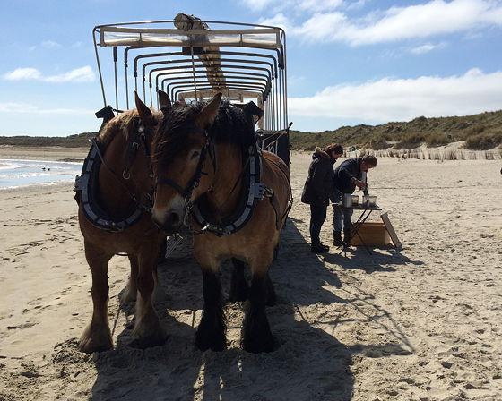 Huifkartocht en Wandeling over Strand en door Duinen opruimen koffie