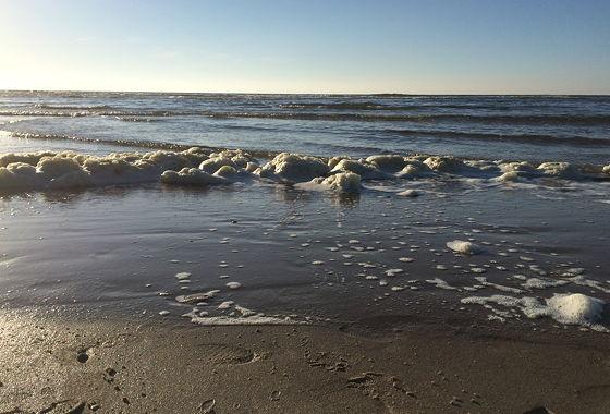 Huifkartocht en Wandeling over Strand en door Duinen schuimkoppen