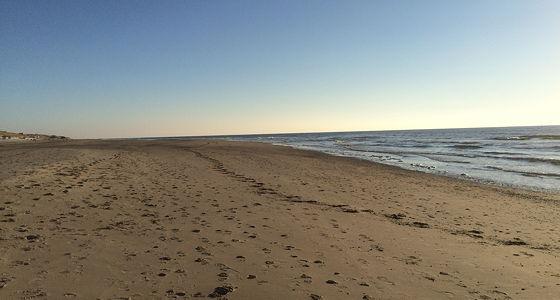 Huifkartocht en Wandeling over Strand en door Duinen rustig achter ons