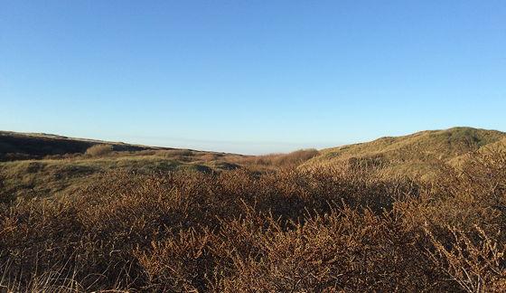 Huifkartocht en Wandeling over Strand en door Duinen uitzicht over de duinen