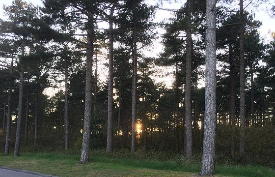 Huifkartocht en Wandeling over Strand en door Duinen zon door bomen