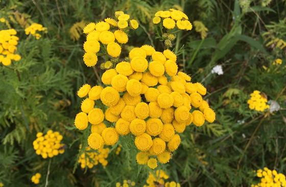 Ploggen Wandeling De Blauwe Kamer gele bloem