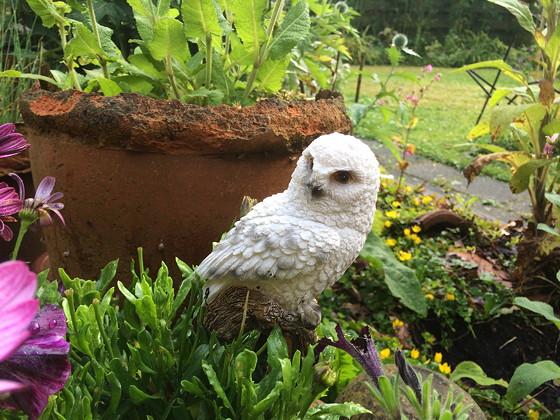 Ploggen 15 Juli 2015: Joure, Sneek en op Visite tuin van Mieneke