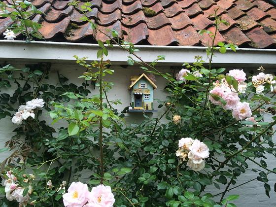Ploggen 17 Juli 2015: Grou en Wandelen bij Sneekermeer vogelhuisje rozenstruiken
