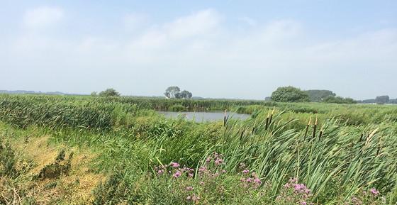 Ploggen 17 Juli 2015: Grou en Wandelen bij Sneekermeer watertjes