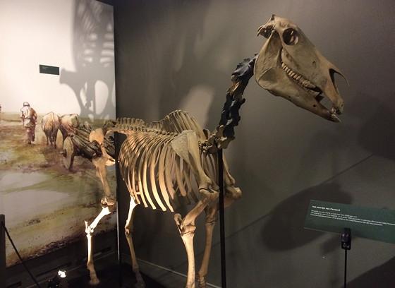 Ploggen 18 Juli 2015: Frysk Landbouwmuseum en Alde Feanen Earnewald skelet paard