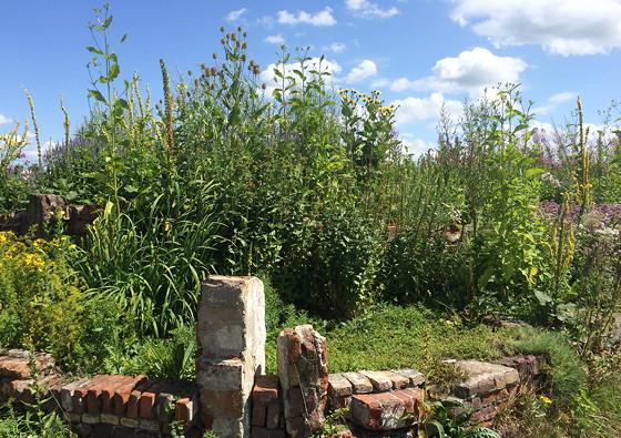 Ploggen 18 Juli 2015: Frysk Landbouwmuseum en Alde Feanen Earnewald tuinen