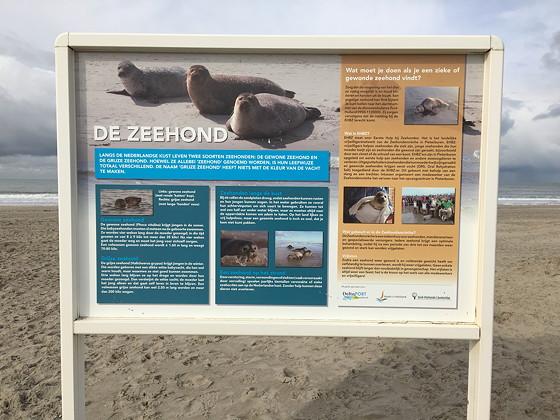 Ploggen 8 Maart 2016: Rondje Hoek van Holland en Bunkers in de duinen zeehonden