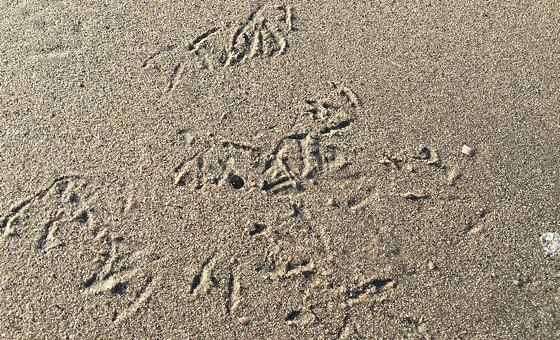 Ploggen 10 Maart 2016: Wandeling op de pier en op visite meeuwenpootjes zand