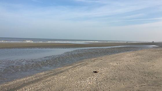 Ploggen 10 Maart 2016: Wandeling op de pier en op visite weer op het strand