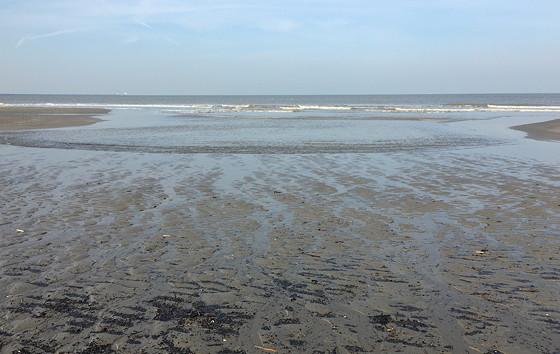 Ploggen 10 Maart 2016: Wandeling op de pier en op visite mooi