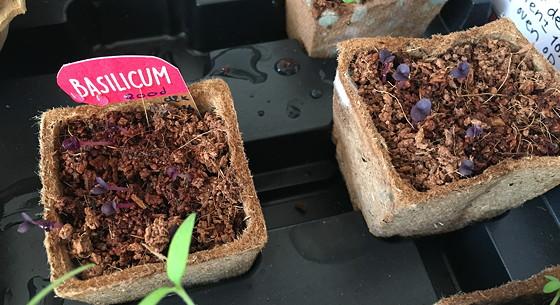 Dagboek van een Moestuintje paarse basilicum dille & kamille
