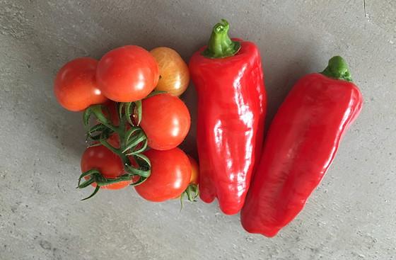 Moestuintje 2016-06: Wat Oogst en t Groeit paprikaatjes tomaatjes